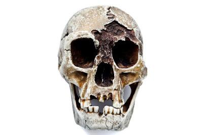 tengkorak homo floresiensis