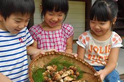 秋の味覚松茸収穫