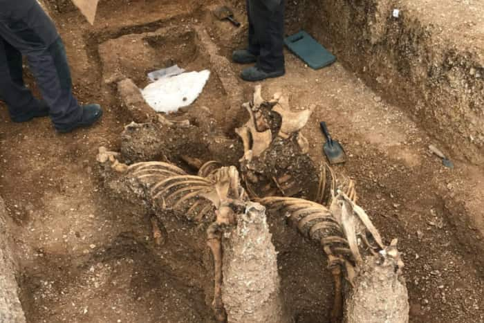 Enterramiento de la Edad del Hierro en Pocklington (East Yorkshire, Reino Unido), con un carro tirado por dos caballos. Foto: The Yorkshire Post.