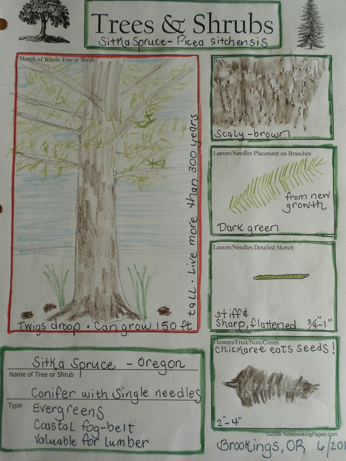 nature journal note notebooking notebookingpages tree pages options many been