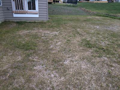 ryan homes yard grass landscaping