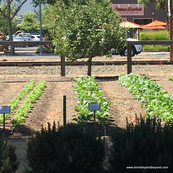 Lettuce Garden At Long Meadow Ranch In St. Helena, California