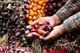 Biodiesel dari Miyak Sawit Tren Positif Indonesia Menguasai Perdagagan Minyak Nabati Dunia