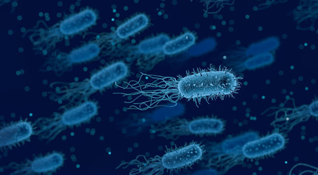 """A new type of """"bacterial infection"""" ... resists antibiotics and warns scientists .. and insurmountable diseases on the road."""