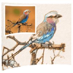 تحميل برنامج تحويل الصور الى لوحة رسم Sketch Drawer Pro