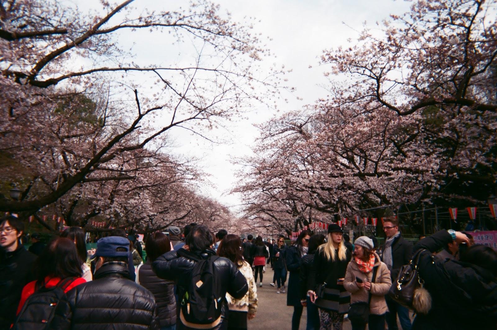 Tokyo in Disposable Camera Ueno Park | www.bigdreamerblog.com