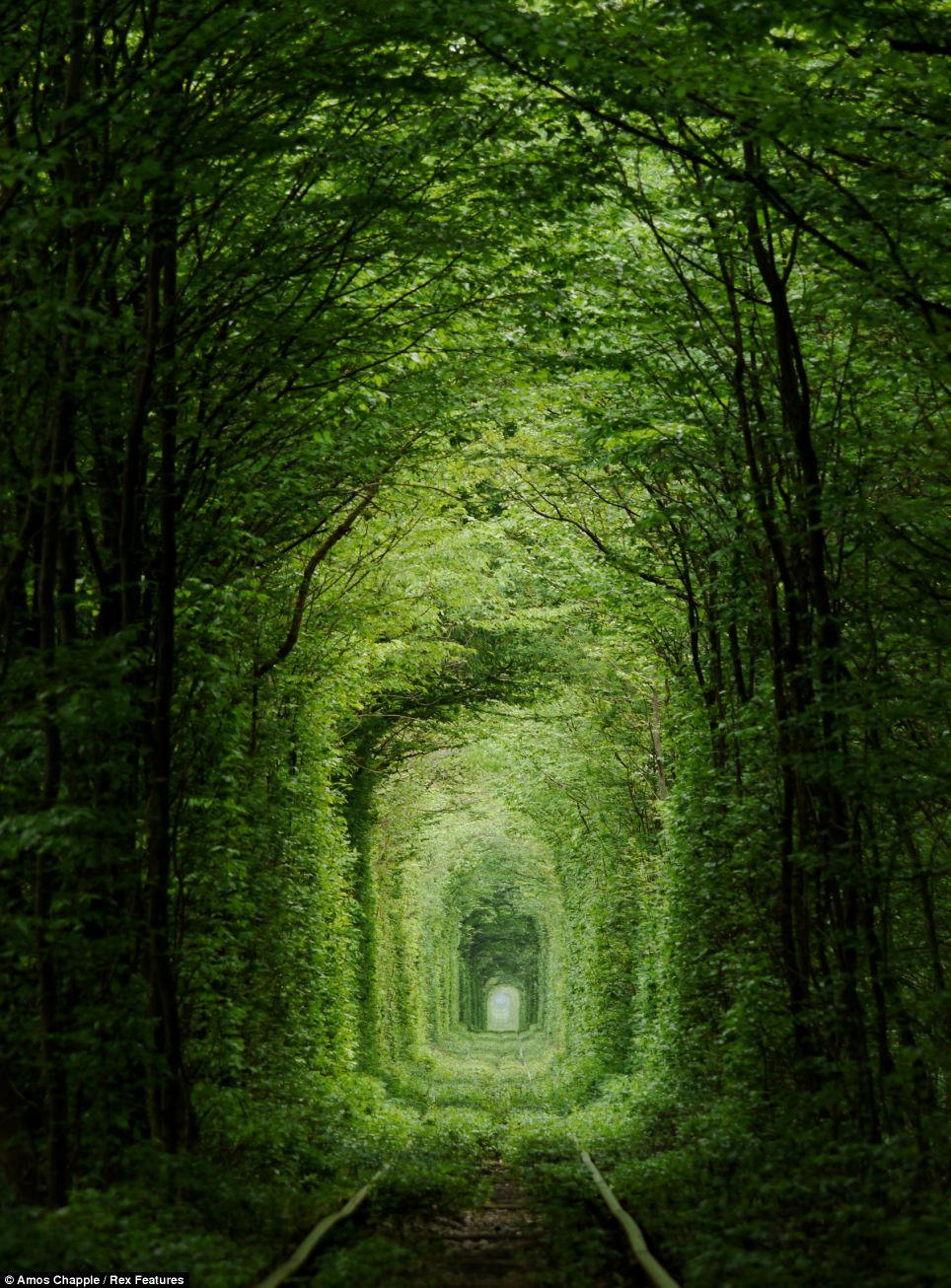 Deserted Places: The romantic 'Tunnel of Love' in Ukraine