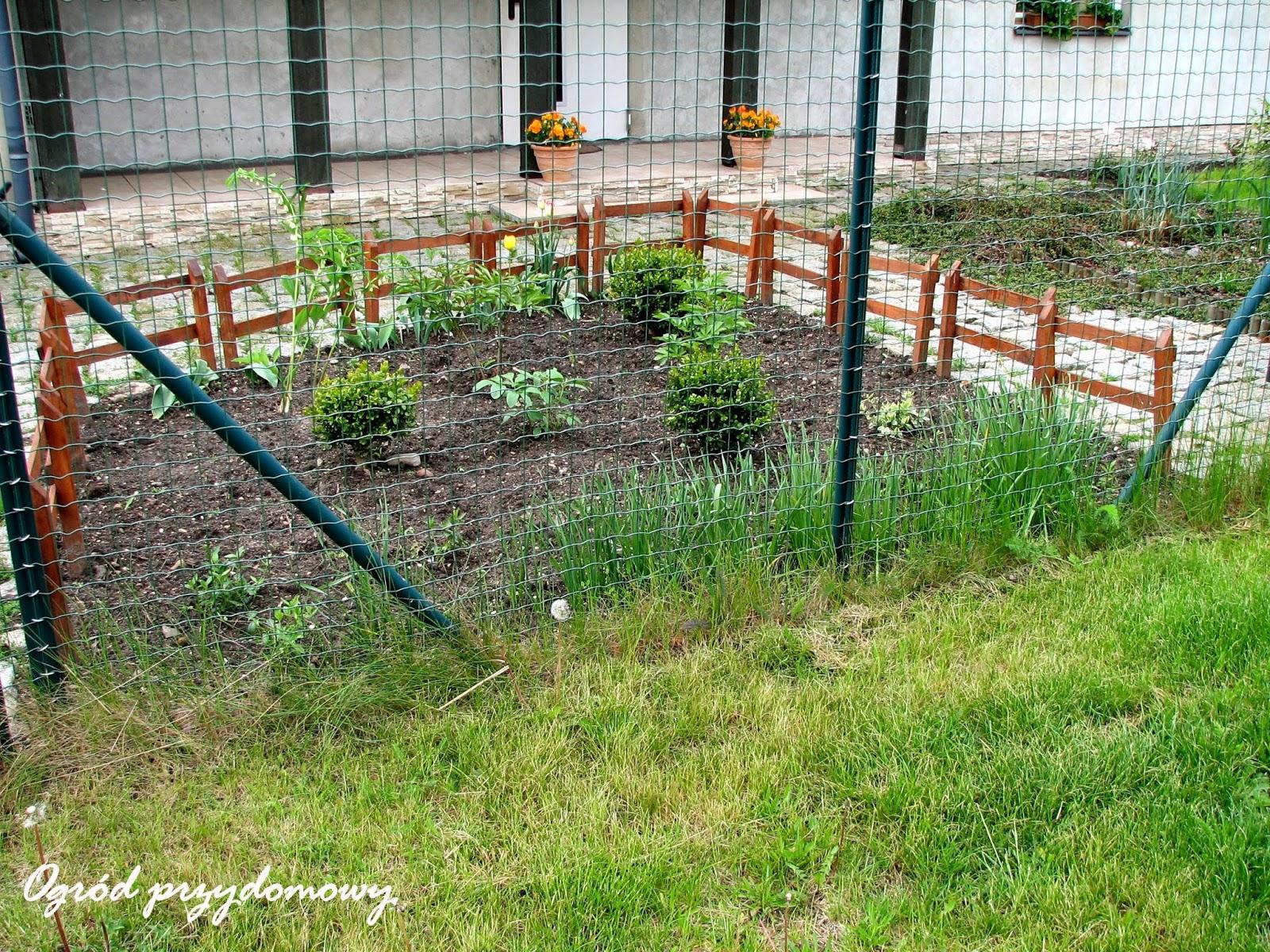 rabata przed domem, ogród przydomowy