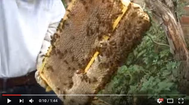 Ελάτε παιδιά: Τέτοια μέλια θα πάρουμε το 2018 video