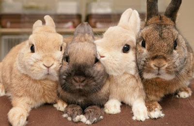 Rabbit personality