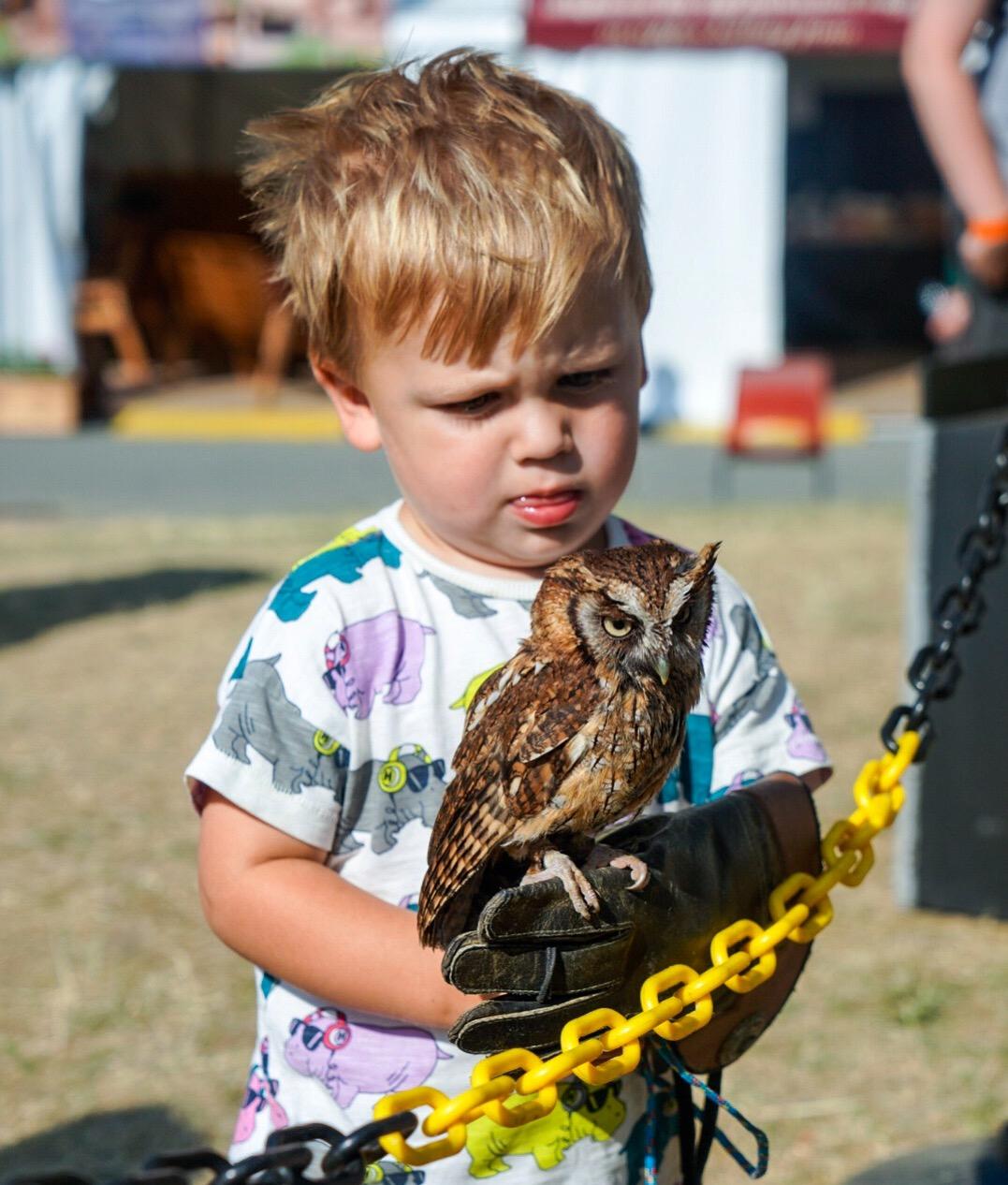 owl rescue shropshire