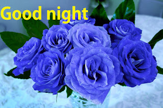 Good night blue rose