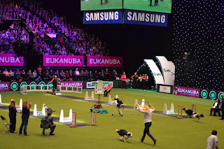 Flyball no Crufts