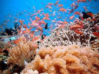 Kejutan Pemandangan Bawah Laut Di Pulau Sabang