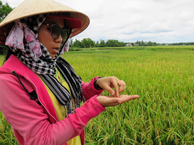 """Yum"", our Heaven and Earth Bicycle Tour guide explains rice farming"