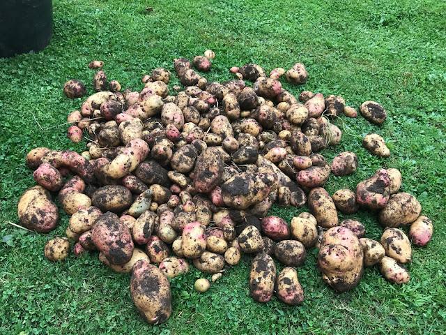 Kartoffel Galactica (c) by Joachim Wenk