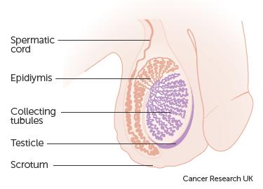 Testicular Cancer Check