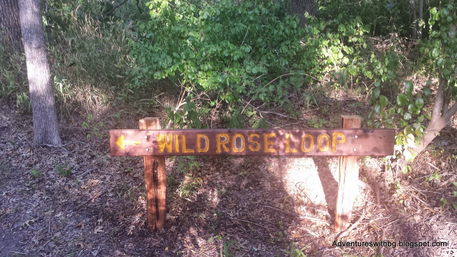 The wild rose loop trailhead at lockhart state park