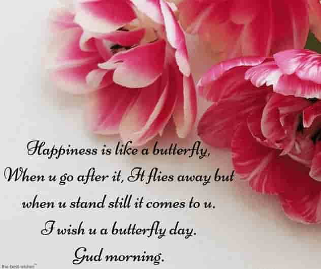 wish you a butterfly day gud morning with flowers