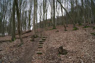 Steiner Stufen aus Findlingen führen im Wald einen Hang hinauf
