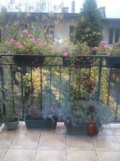 pelargonie, grudzień, balkon, koniec sezonu