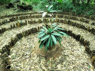 Planta no Centro do Labirinto da Oração na EST, São Leopoldo