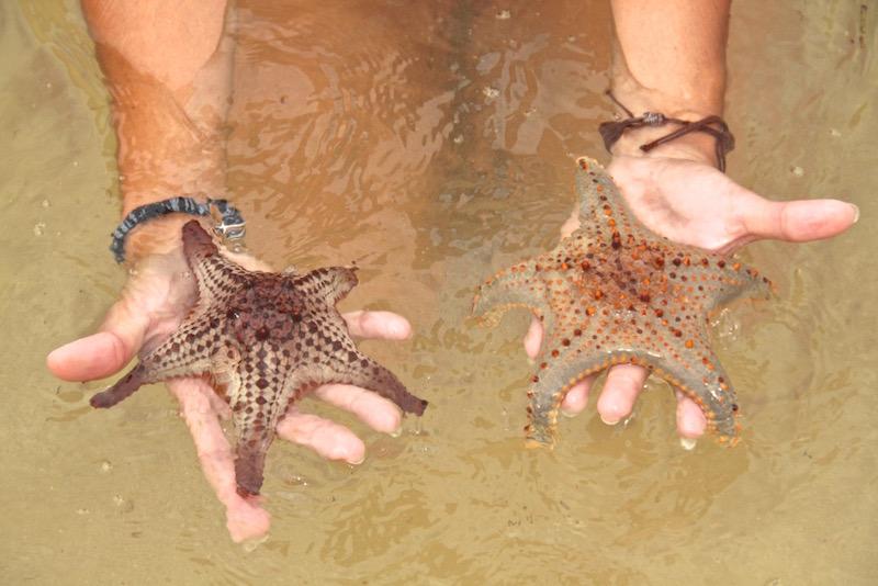 Estrelas do mar em Moreton Island