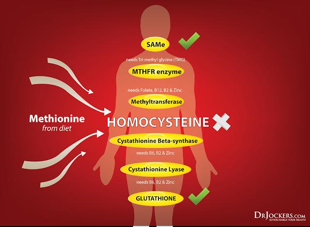Гомоцистеин и здоровье.