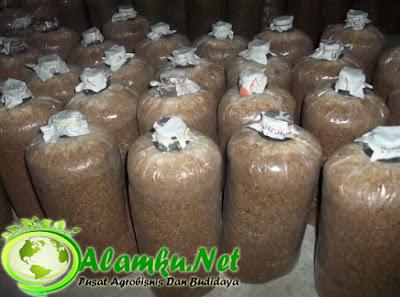 Baglog Jamur