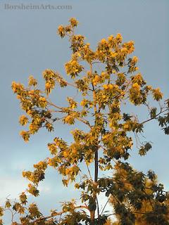 Castagna Tree, Chestnut Tree, Vellano, Tuscany, Italy, Cava Nardini