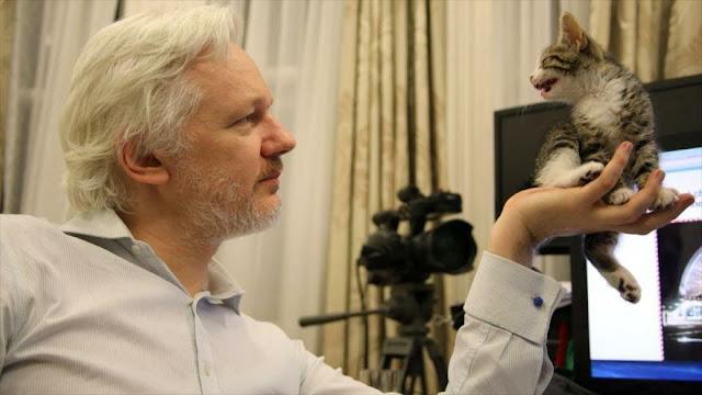 WikiLeaks niega acusación de Ecuador sobre 'gato espía' de Assange