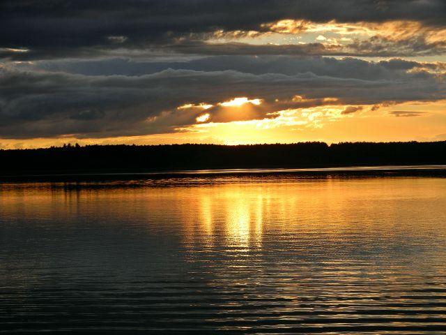 wieczór, jezioro, Kormoran, złote odbicia