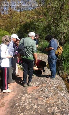 http://www.biodiversidadvirtual.org/insectarium/III-Testing-de-Biodiversidad-Punto-BV-Espacio-Pirineos-img797452.html