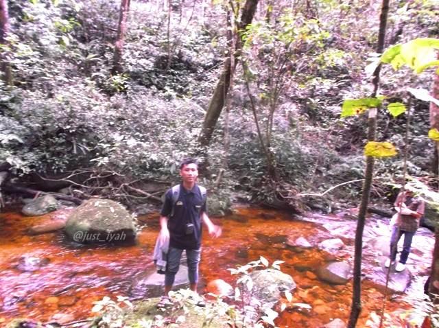 Sungai di Hutan Aek nauli