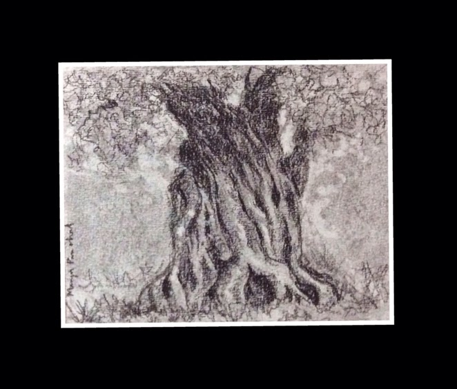 charcoal sketching of a tree on Fabriano Academia sheet by Manju Panchal