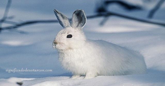 Significado de soñar con conejos