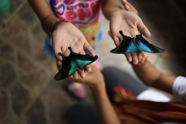 Taman Wisata Kupu-Kupu atau Bali Butterfly Park