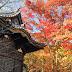 Yokohama: Autumn Views at Sankeien Garden (三渓園)