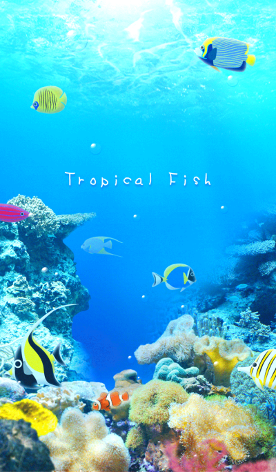 Sea of Tropical Fish