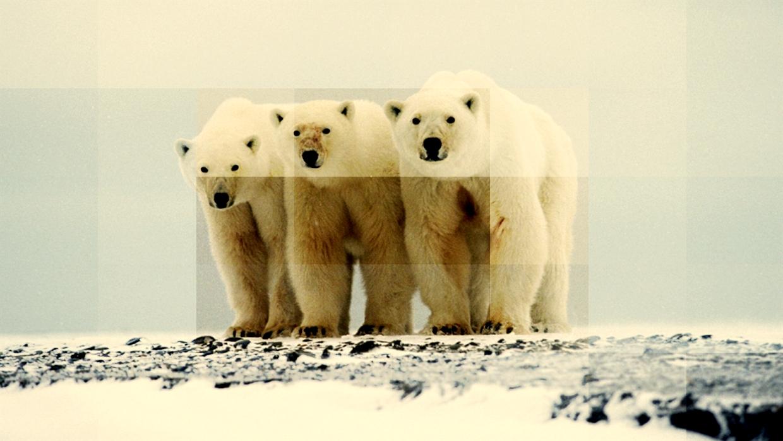animais do polo sul