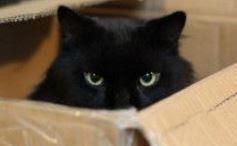 carton et chat 1