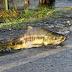 INCRÍVEL: Vídeo impressionante mostra peixes atravessando rodovia, assista
