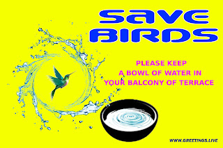 Save birds greetings image please keep water in a bowl