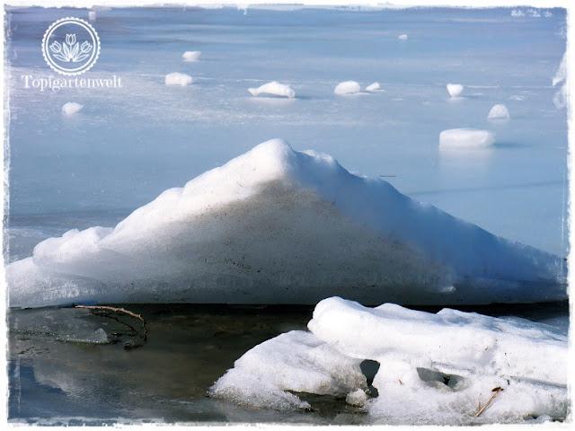 Gartenblog Topfgarenwelt Wallersee: Eisscholle