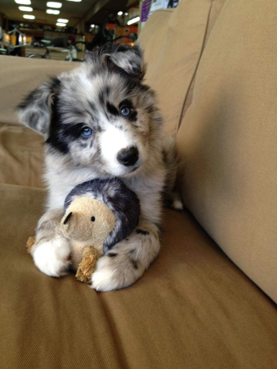 Cute dogs - part 163, cute animal images, best dog photo, funny dog pics