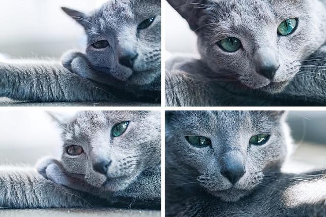 Veja o quanto esse gato é bonito