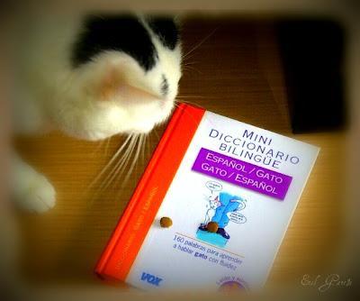 mini-diccionario-bilingue-gato-espanol