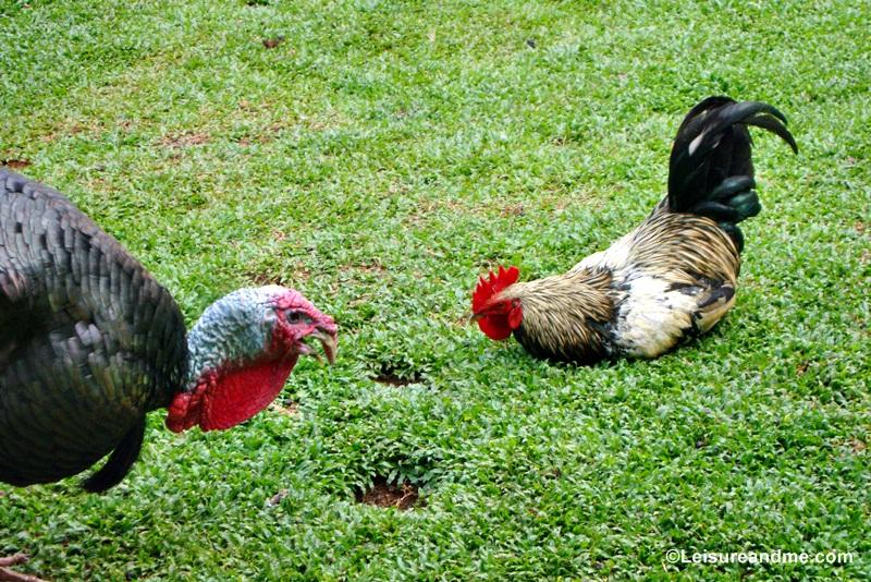 Pinnawala Zoo Sri Lanka