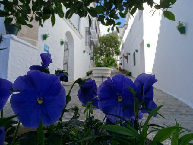 calle alta el gastor flores museo usos y costumbres macetas cadiz andalucia