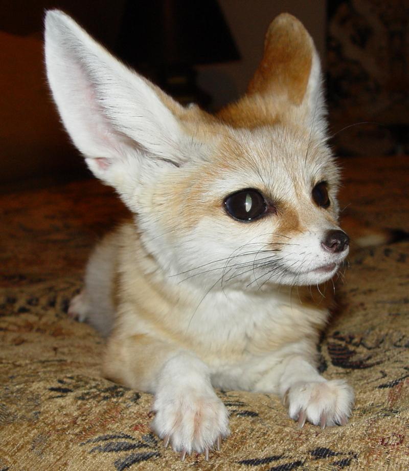 Animal Adaptation Homework Help Animal Adaptation Explained For